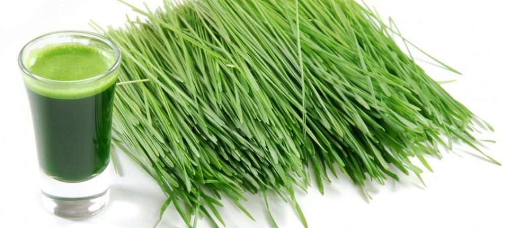 cropped-cut-wheatgrass-and-a-glass-of-wheatgrass-juice1